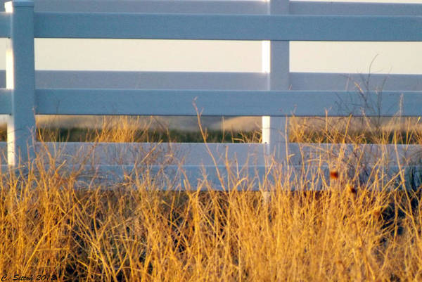 Photograph - White Fence by C Sitton