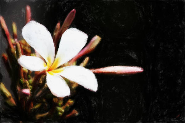 Painting - White Frangi 301 by Dean Wittle