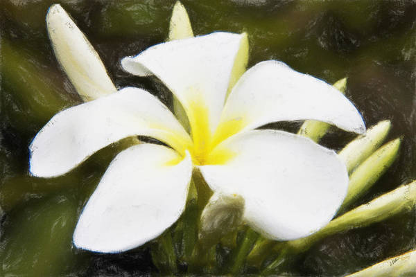 Painting - White Frangi by Dean Wittle