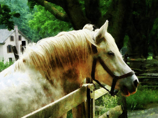 Photograph - White Horse Closeup by Susan Savad