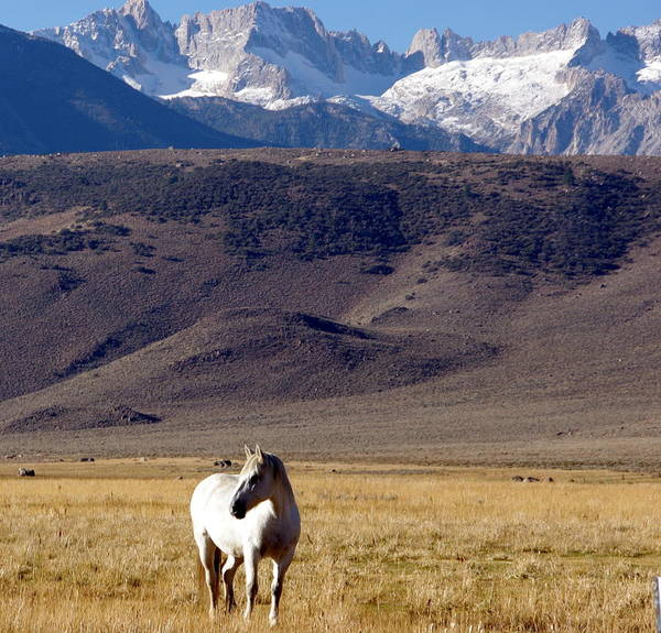 Photograph - White Horse Grazing by Jeff Lowe