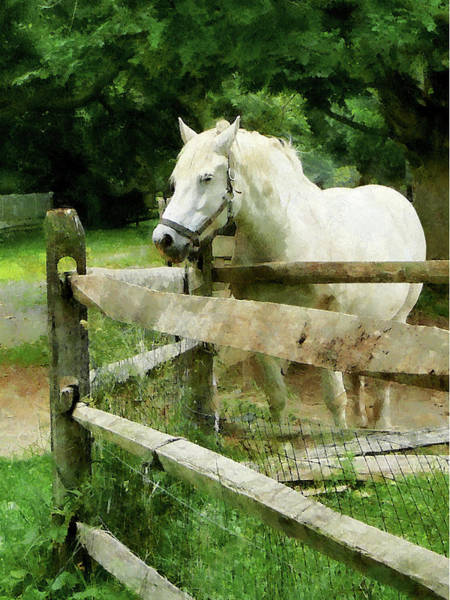 Photograph - White Horse In Paddock by Susan Savad