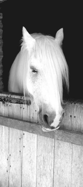 Photograph - White Horse by Roberto Alamino