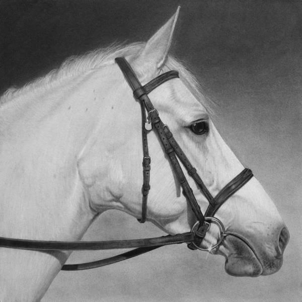 Drawing - White Horse by Tim Dangaran