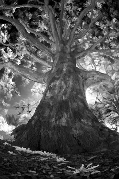 Photograph - White Oak by Steve Zimic