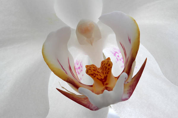 Photograph - White On White by Juergen Roth