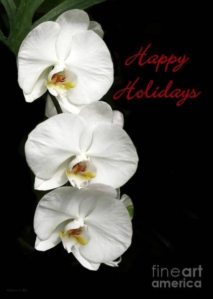 Photograph - White Orchid Holiday Card by Sabrina L Ryan