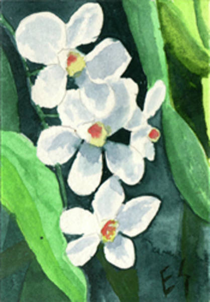 Painting - White Orchids by Eric Samuelson