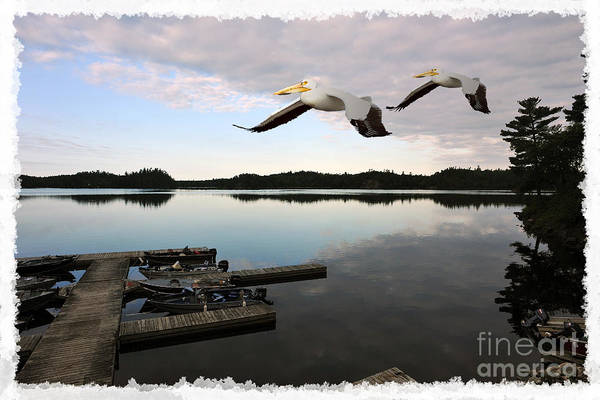 Photograph - White Pelicans Flying Over Docks by Dan Friend
