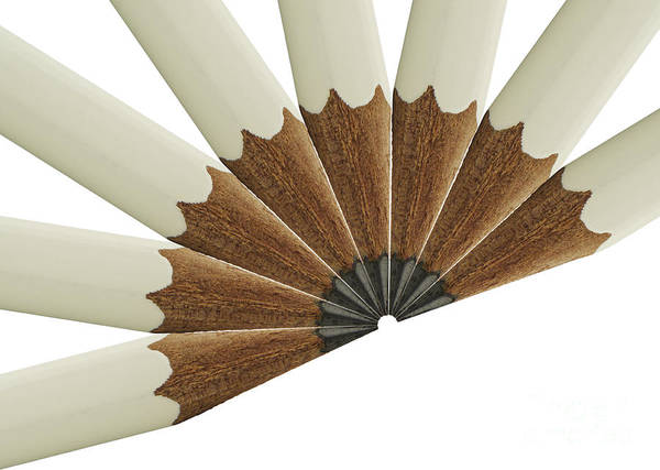 Pencil Sketch Photograph - White Pencil Fan by Blink Images