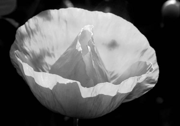 Photograph - White Poppy Flower by Emanuel Tanjala