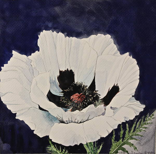 Painting - White Poppy-posthumously Presented Paintings Of Sachi Spohn  by Cliff Spohn