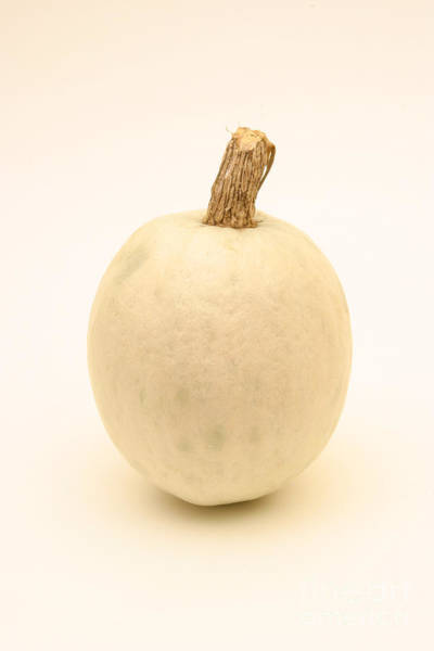 Cucurbitaceae Photograph - White Pumpkin by Ted Kinsman