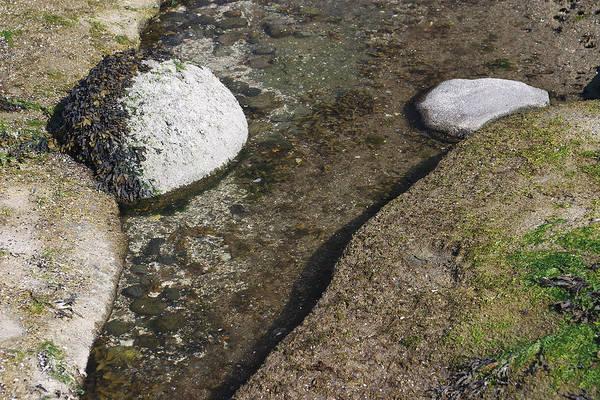 Photograph - White Rock Green by David Kleinsasser