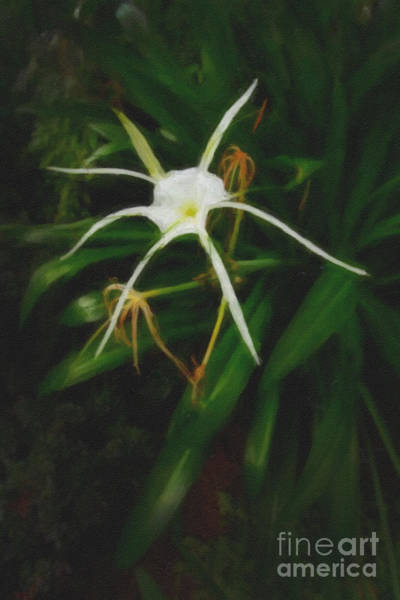 Regal Digital Art - White Spider Lily Painting by M K Miller