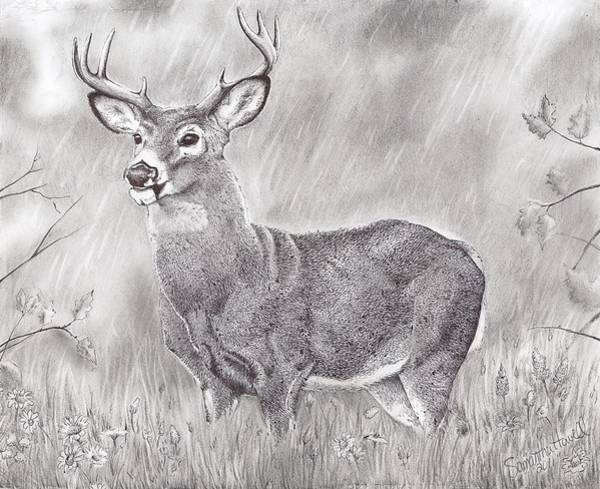 Whitetail Drawing - Whitetail Deer by Samantha Howell