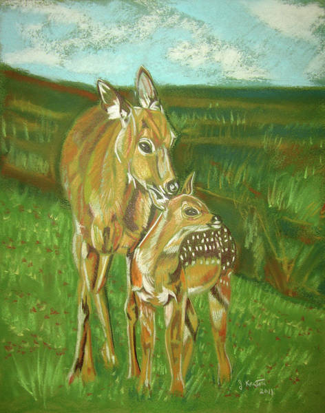 Whitetail Drawing - Whitetail Doe And Fawn by John Keaton
