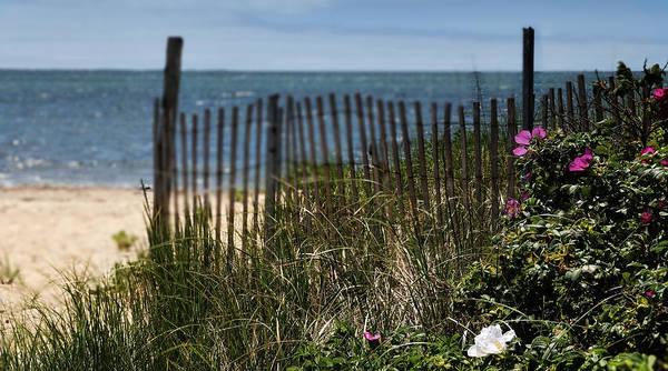 Photograph - Wild Beach Rose - Cape Cod by T-S Fine Art Landscape Photography