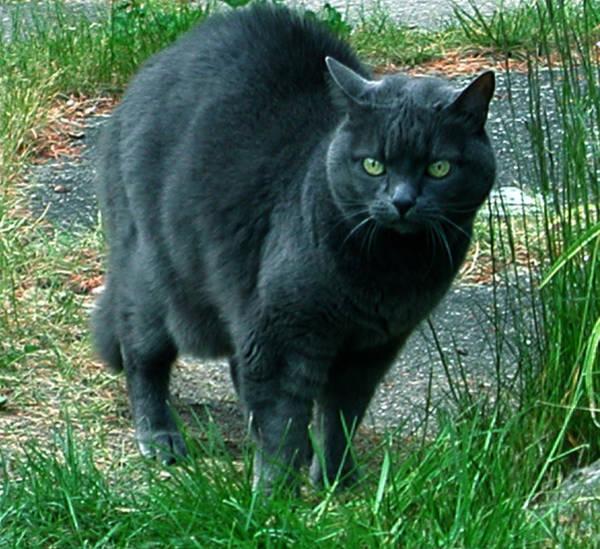 Photograph - Wild Cat Hunter by Colette V Hera  Guggenheim