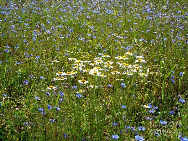 Wall Art - Photograph - Wild Flowers by Pauline Ross