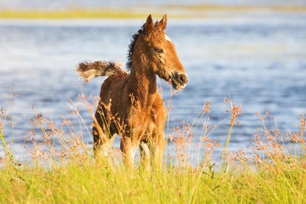 Wild Foal Art Print