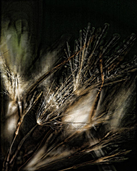Earthtones Photograph - Wild Grasses by Bonnie Bruno