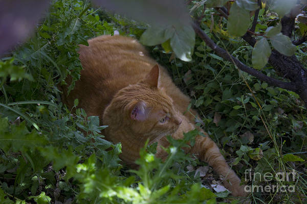 Photograph - Wildcat by Donna L Munro