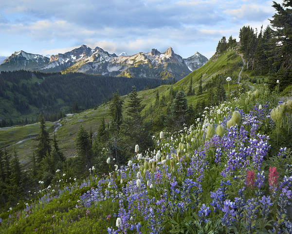 Photograph - Wildflowers And Tatoosh Range Mount by Tim Fitzharris