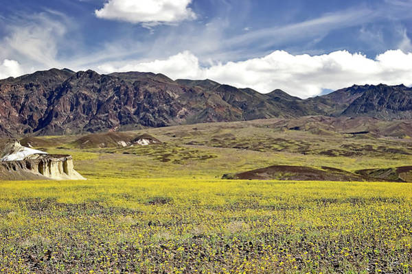 Photograph - Wildflowers In Death Valley by Endre Balogh