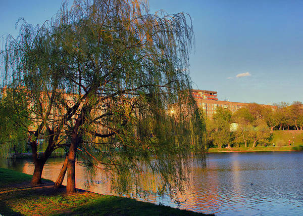 Photograph - Willow At Sunset by Michael Goyberg