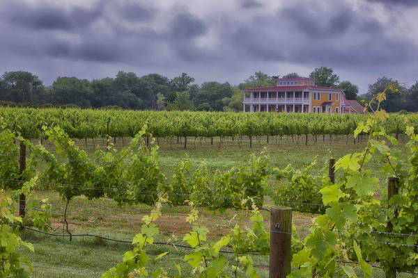 Photograph - Willow Creek Winery by Tom Singleton