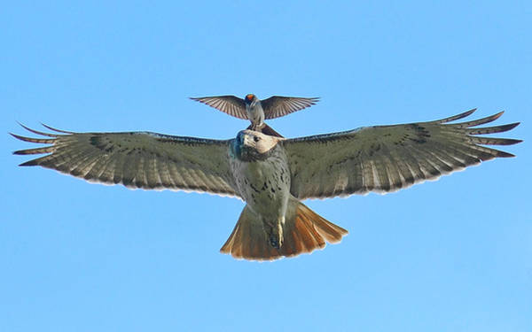 Wall Art - Photograph - Wind Beneath My Wings by William Jobes