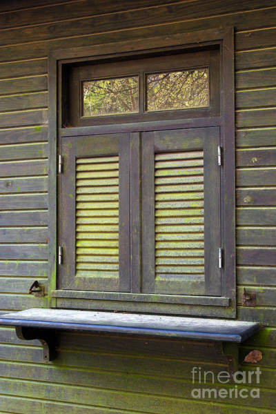 Chalet Photograph - Window And Moss by Carlos Caetano