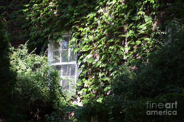 Window And Vines Art Print