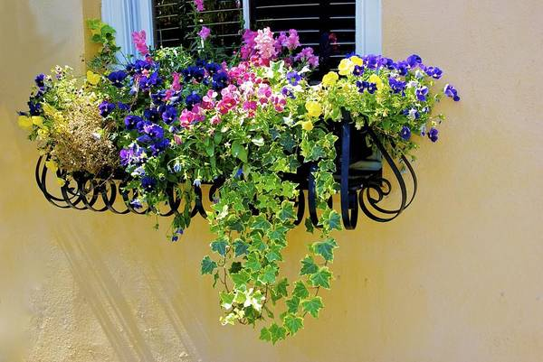 Photograph - Window Box by Ralph Jones
