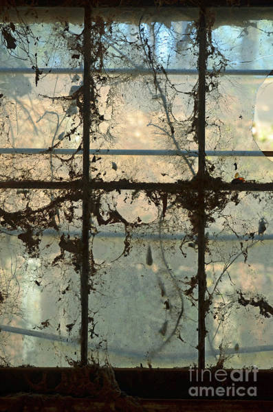 Wall Art - Photograph - Window Vines by Patricia Caldwell