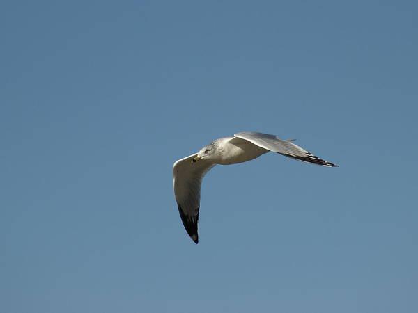 Photograph - Windy Gull - 5 by Jeffrey Peterson