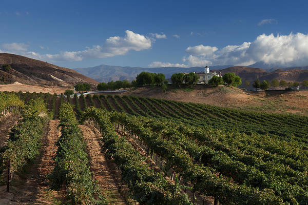 Photograph - Wine Country Temecula by Cliff Wassmann