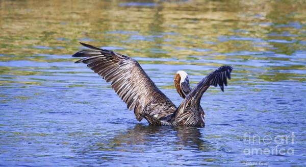 Photograph - Wings Up by Deborah Benoit