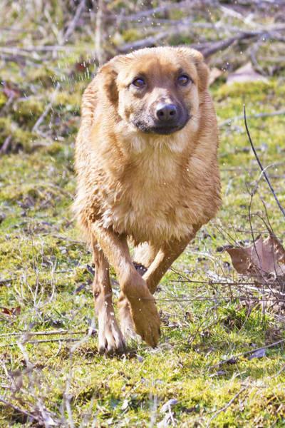 Dog Training Photograph - Winning The Race by Betsy Knapp