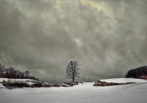 Solitary Wall Art - Photograph - Winter Blues by Evelina Kremsdorf