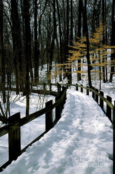 Maryland Wall Art - Photograph - Winter Boardwalk Path In A Park In Maryland by William Kuta