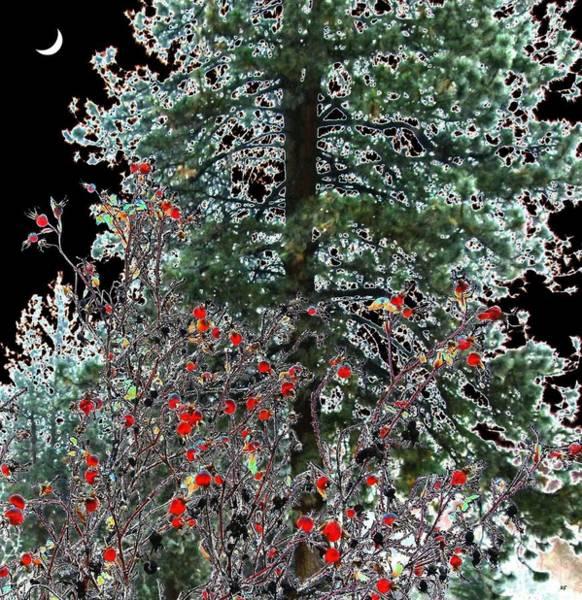 Pine Valley Digital Art - Winter Color by Will Borden