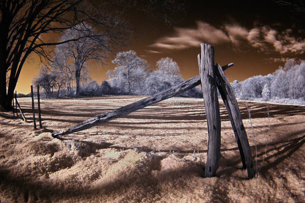 Photograph - Winter Dream by Steve Zimic