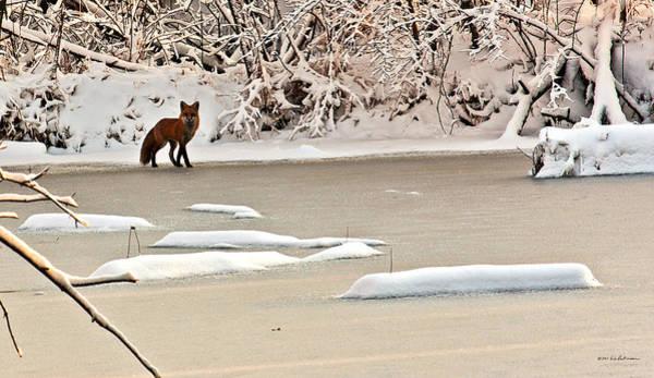 Photograph - Winter Fox by Edward Peterson