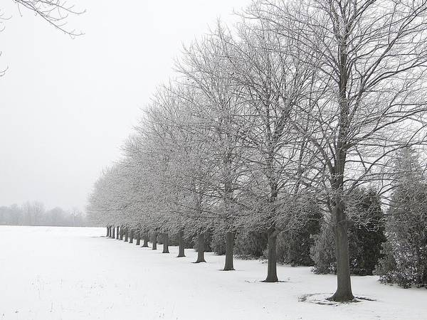 Mixed Media - Winter Hoar Frost On Trees by Bruce Ritchie
