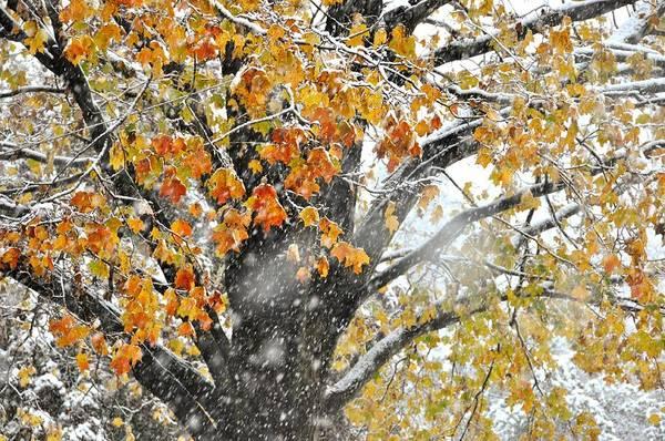 Photograph - Winter Autumn Collide by JAMART Photography