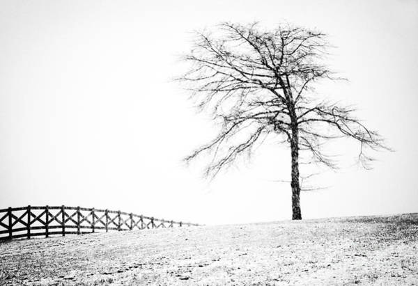 Photograph - Winter In Black And White by David Waldrop