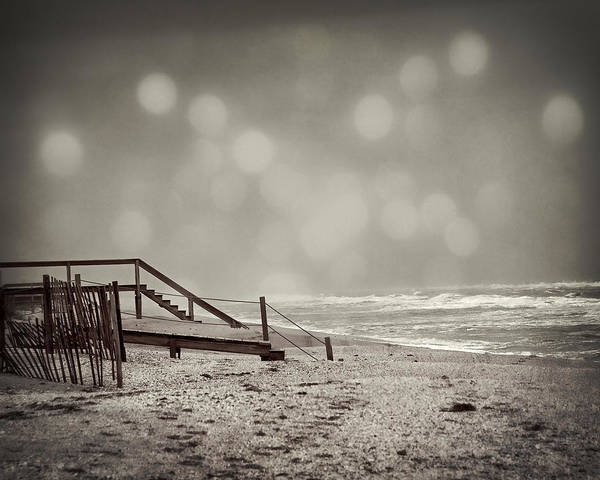 Photograph - Winter In Florida by Mario Celzner