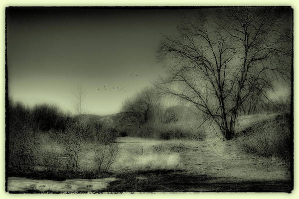 Wall Art - Photograph - Winter In South Platte Park IIi by David Patterson